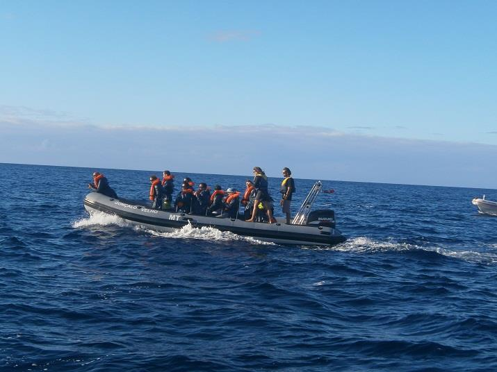 Du har altid ansvar som rejseleder. Også når man er på hvalsafari.