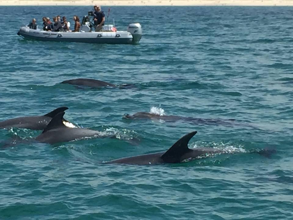 Delfin safari ved Portugals vestkyst.