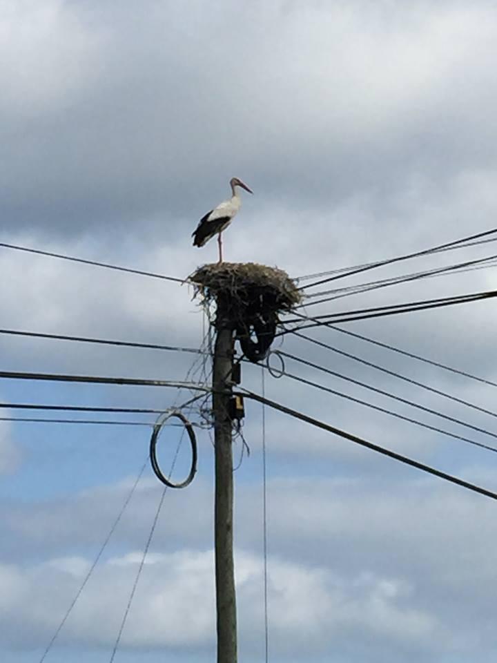der er masser af storke i Alentejo.