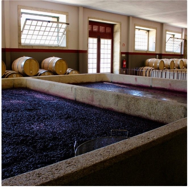 Portvins druerne bliver lagret i store granit tanke.